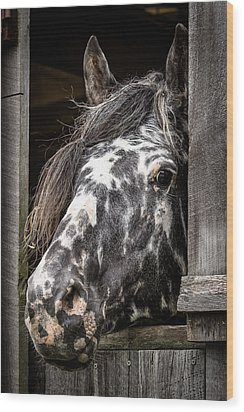 Guard Horse-what's The Password? Wood Print