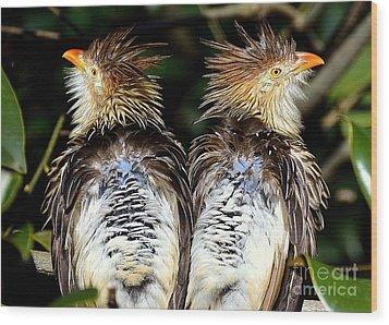 Guira Cuckoos Wood Print by Lisa L Silva