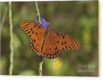 Wood Print featuring the photograph Gulf Fritillary Butterfly by Meg Rousher
