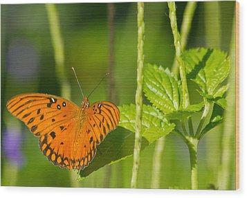 Wood Print featuring the photograph Gulf Fritillary by Jane Luxton