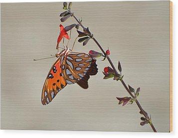Gulf Fritillary Underwings Wood Print