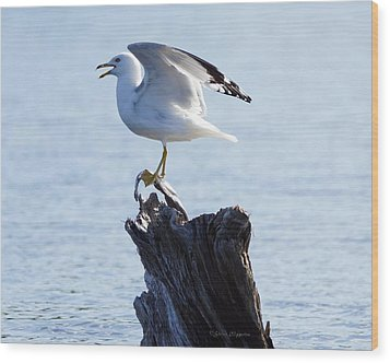 Gull - Able Wood Print by Steven Clipperton