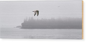 Gull In Flight Wood Print by Marty Saccone