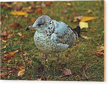 Gull Wood Print by Jp Grace