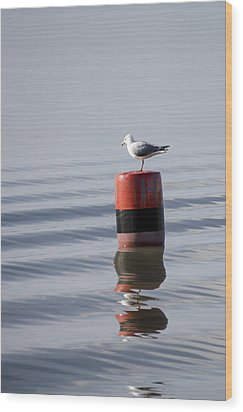Gull Wood Print by Spikey Mouse Photography