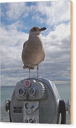 Wood Print featuring the photograph Gull by Mim White