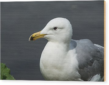 Gull Wood Print by Michele Wright