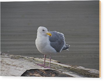 Wood Print featuring the photograph Gull On A Log by David Stine