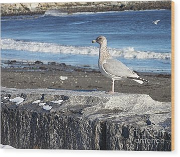 Wood Print featuring the photograph Seagull  by Eunice Miller