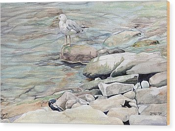Gull On The Rocks Wood Print