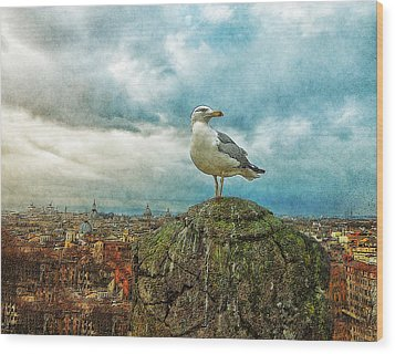 Gull Over Rome Wood Print by Jack Zulli