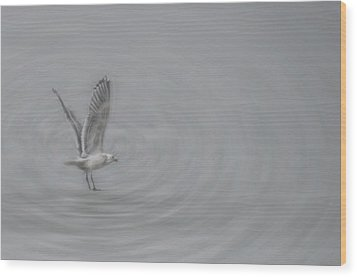 Gull Vortex Wood Print