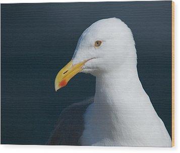 Gull Watcher Wood Print by Bob Smithing