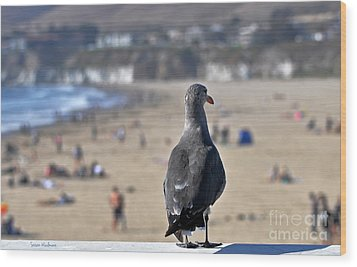 Gull Watching Beach Visitors Wood Print by Susan Wiedmann