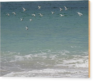 Gulls Flying Over The Ocean Wood Print by Zina Stromberg