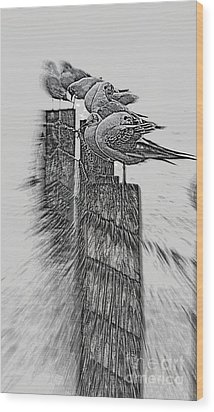 Wood Print featuring the photograph Gulls In Pencil Effect by Linsey Williams