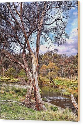 Gum Tree By The River Wood Print by Wallaroo Images