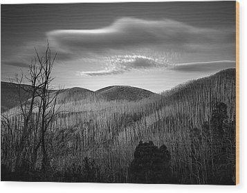 Gums Of Grey Wood Print by Mark Lucey