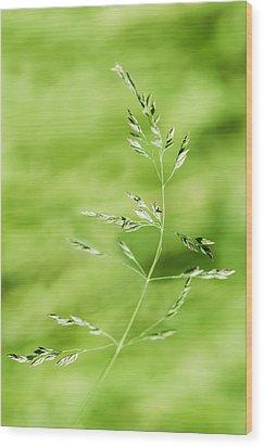 Gust Of Wind - Featured 3 Wood Print by Alexander Senin