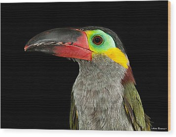 Wood Print featuring the photograph Guyana Toucanette by Avian Resources