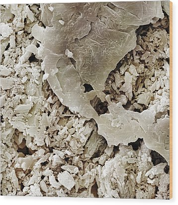 Gypsum Crystals Sem Wood Print by Science Photo Library