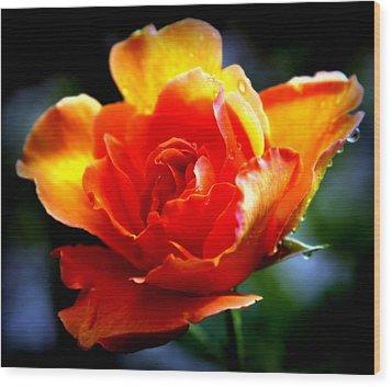Gypsy Rose Wood Print by Karen Wiles