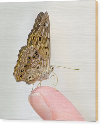 Hackberry Emperor On Finger Wood Print
