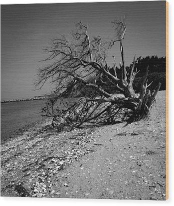 Haggard Tree Wood Print