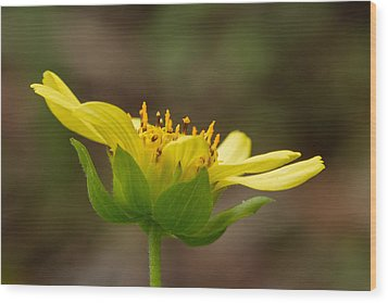 Wood Print featuring the photograph Hairy Leafcup by Paul Rebmann
