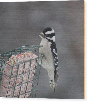 Hairy Woodpecker Wood Print by Heidi Hermes