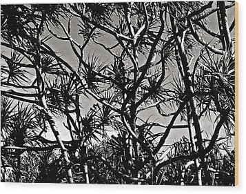 Hala Trees Wood Print