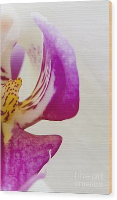 Half An Orchid Wood Print by Anne Gilbert