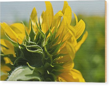 Half Sunflower Wood Print by Georgia Fowler