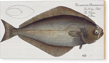 Halibut Wood Print by Andreas Ludwig Kruger