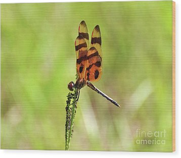 Halloween Pennant Wood Print by Al Powell Photography USA