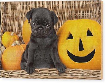 Halloween Pug Wood Print by Greg Cuddiford