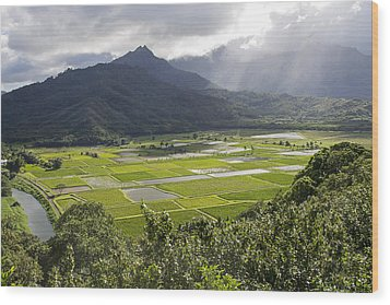 Hanalei Taro Fields Wood Print by Saya Studios