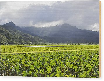 Hanalei Valley Taro Field Wood Print by Saya Studios