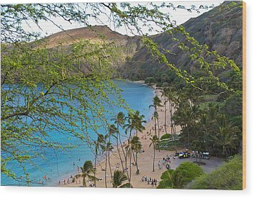 Hanauma Bay Nature Preserve Beach Through Monkeypod Tree Wood Print