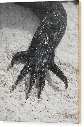 Wood Print featuring the photograph Hand Of A Marine Iguana by Liz Leyden