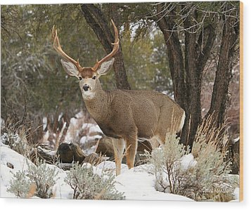 Handsome Buck Wood Print by Donna Kennedy