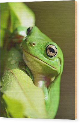 Hang In There Frog Wood Print