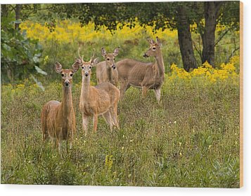 Hangin With The Ladies Wood Print by Thomas Pettengill