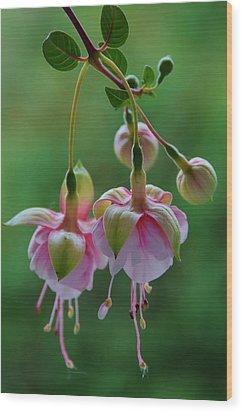 Wood Print featuring the photograph Hanging Fuschia by Debra Martz