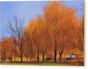 Hanging Leaves Wood Print by Sarai Rachel