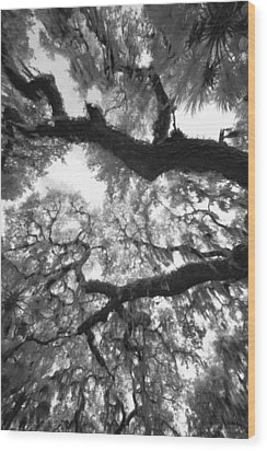 Wood Print featuring the photograph Hanging Moss by Bradley R Youngberg