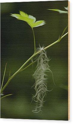 Hanging On Wood Print by David Kehrli