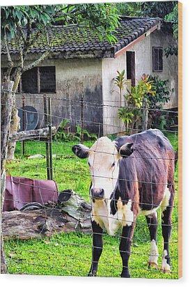 Wood Print featuring the photograph Hanzawa Cow 1 by Dawn Eshelman