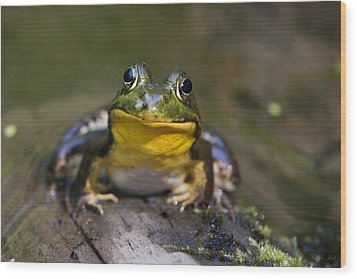 Happiness Frog Wood Print by Christina Rollo