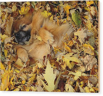 Happiness Is A Fresh Pile Of Leaves Wood Print by Joe Wicks